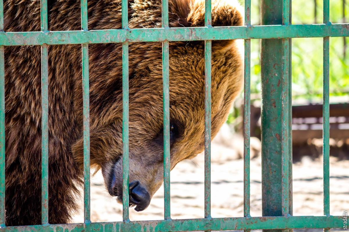 Зоопарк на базе отдыха Экзотика, Спорное, Бобруйский район, Могилевская область