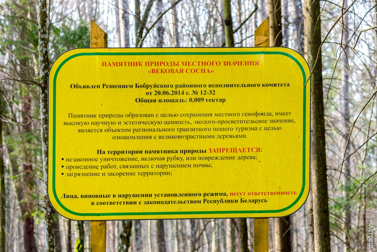 Вишневка, Бобруйский район, Могилевская область