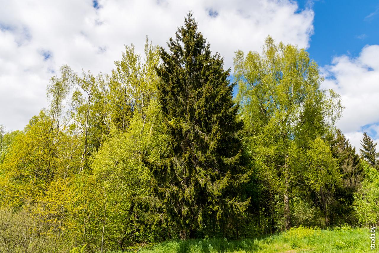 Гора Дзержинская, Скирмантово, Дзержинский район, Минская область